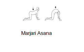 marjari Asana